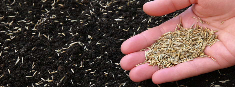 Grass Seed Buying Guides